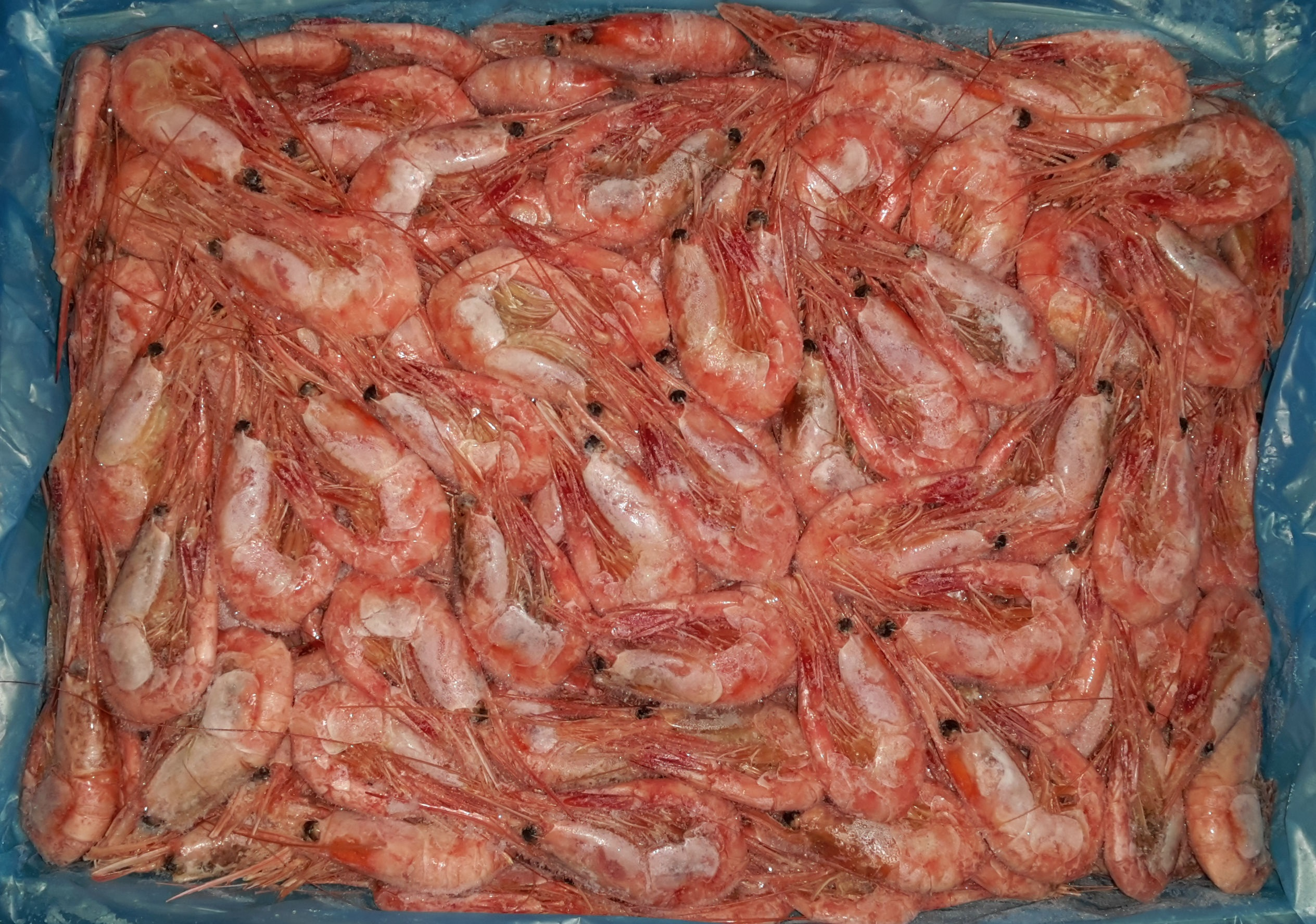 shrimp-Magadan-50-70